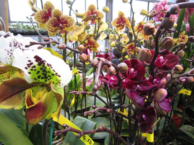 Orchideenausstellung Frankfurt Palmengarten Img_1713