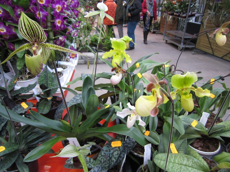 Orchideenausstellung Frankfurt Palmengarten Img_1715