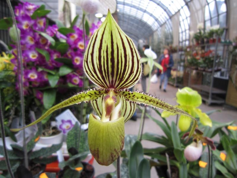 Orchideenausstellung Frankfurt Palmengarten Img_1716