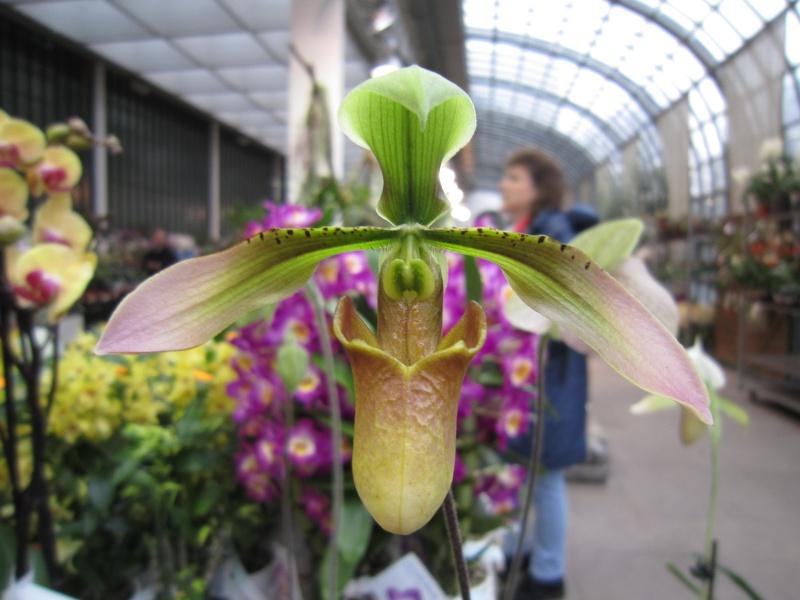 Orchideenausstellung Frankfurt Palmengarten Img_1717