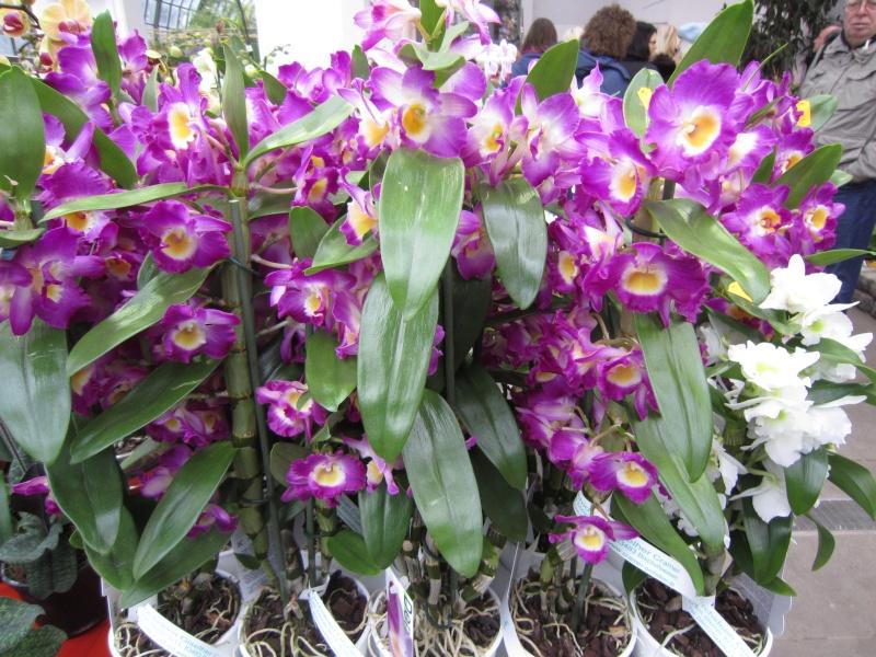 Orchideenausstellung Frankfurt Palmengarten Img_1718