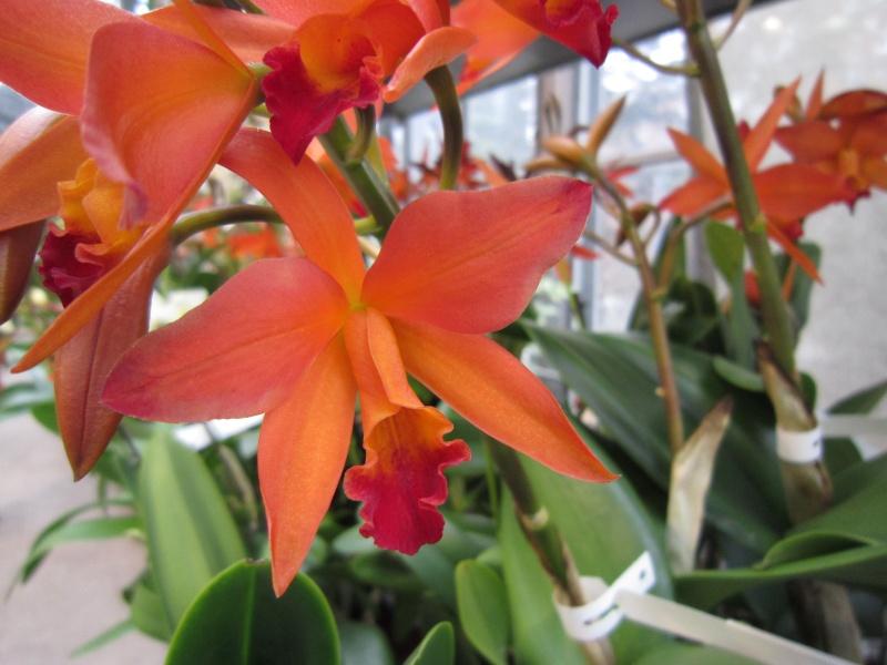 Orchideenausstellung Frankfurt Palmengarten Img_1719