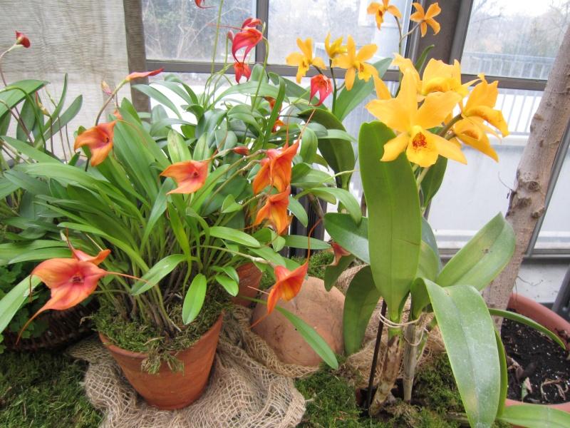 Orchideenausstellung Frankfurt Palmengarten Img_1720
