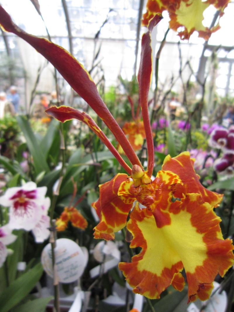 Orchideenausstellung Frankfurt Palmengarten Img_1810