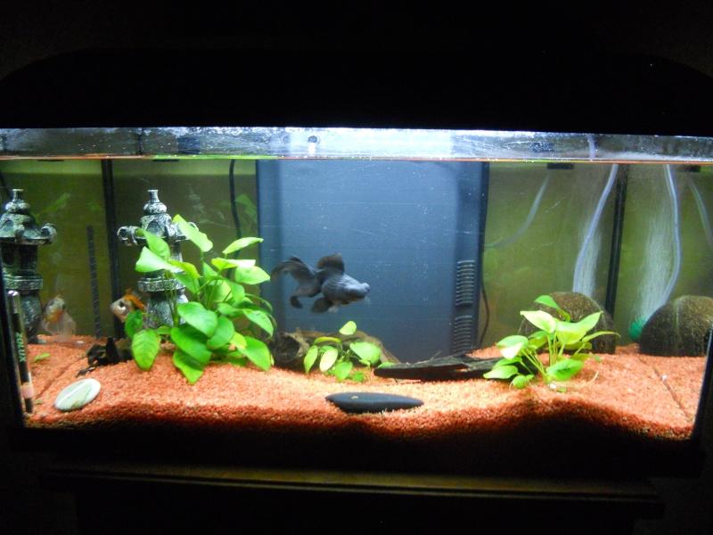 Changement d'aquarium Dscn1716