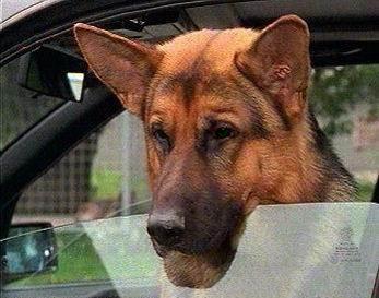 Kira,chienne qui fling l'oeil Sans_t43