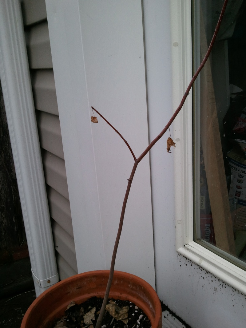 New to Bonsai - 2 strategy questions Camera15