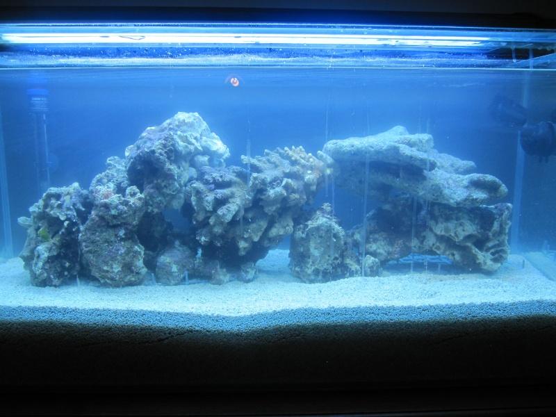 Aquarium  200 l - Page 2 Img_5412