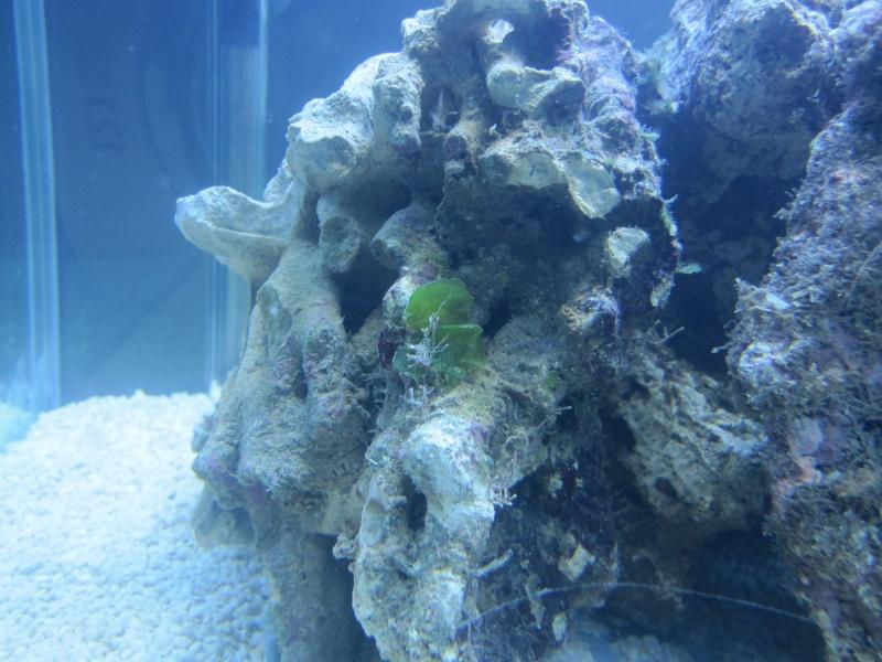 Aquarium  200 l - Page 2 Img_5413