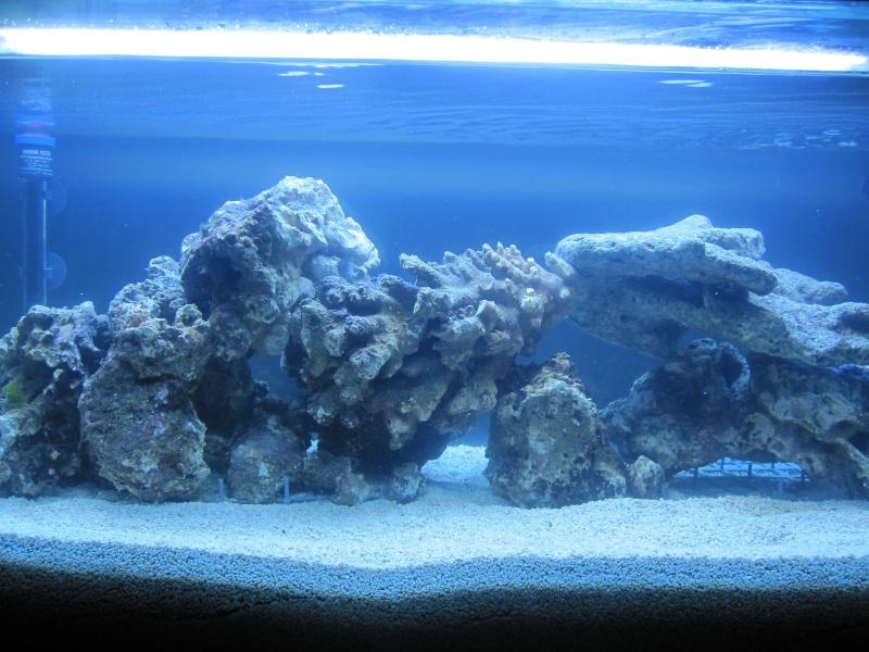 Aquarium  200 l - Page 2 Img_5414