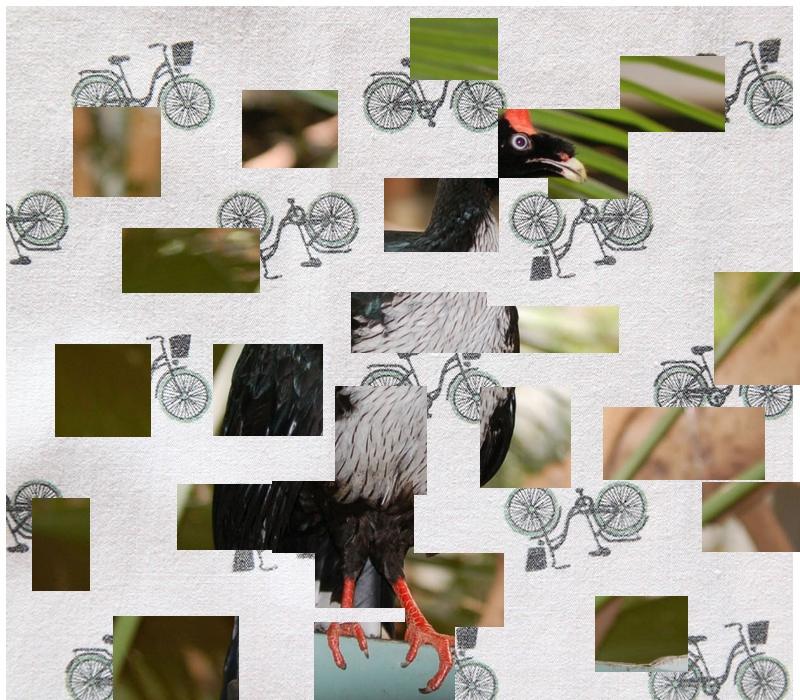 Oiseau Martine 24/06/2018 bravo Jov Oiseau13