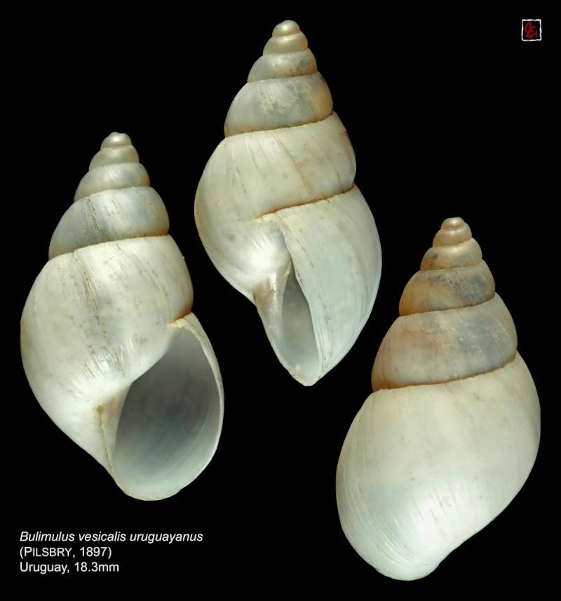Propositions & avancées dans le forum des mollusques continentaux. - Page 7 93350710