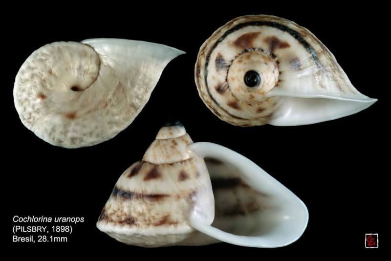 Propositions & avancées dans le forum des mollusques continentaux. - Page 7 94289211