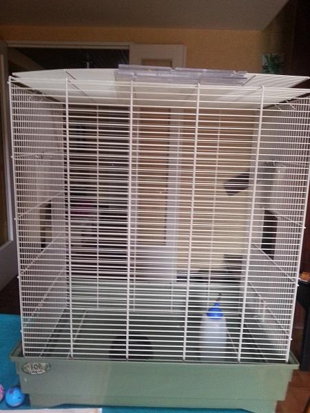 Cage rats métal 20130410
