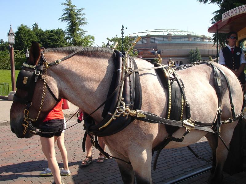 Disneyland du 8 au 10 juillet et Paris du 14 au 15 août 2013, avec les enfants Dsc04513