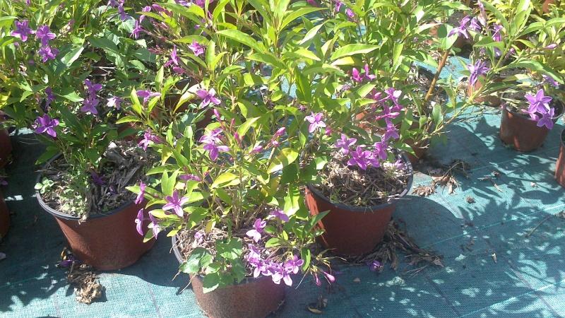 jolie petite plante R11