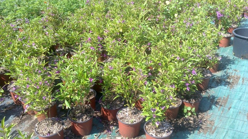 jolie petite plante Ruelli13
