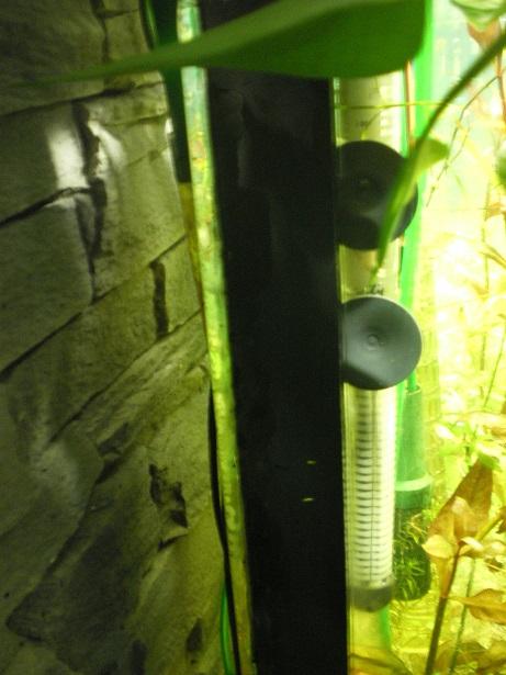 aquarium qui fuit  Imgp0418