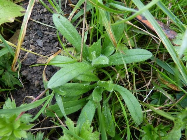 plantes du jardin bon ou pas? P1070916