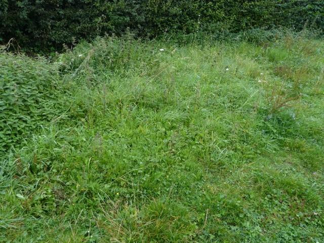 plantes du jardin bon ou pas? P1070918