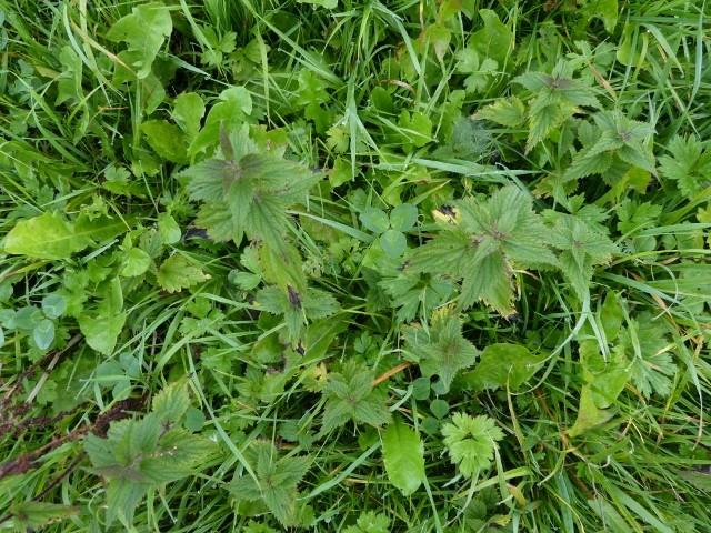 plantes du jardin bon ou pas? P1070919