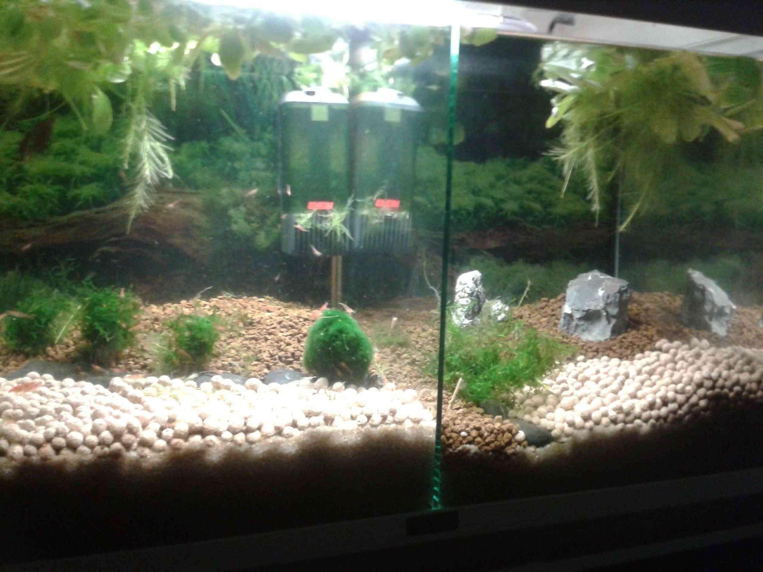 Gozgull Shrimp's 2013-015
