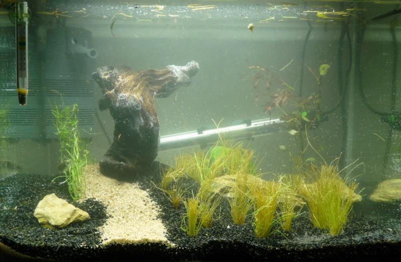 Nouvel aquarium Scaper's Tank 50 L P1080010