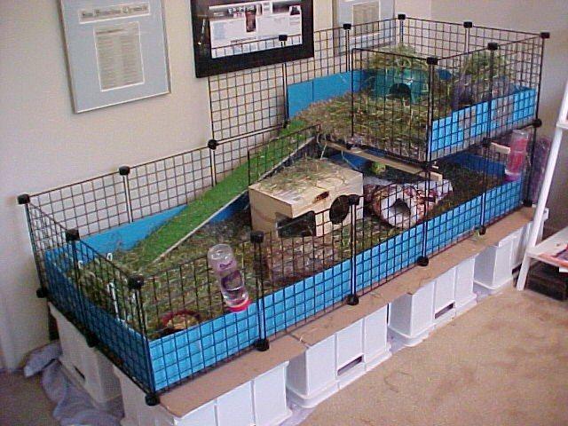 cage simpa Fullca10