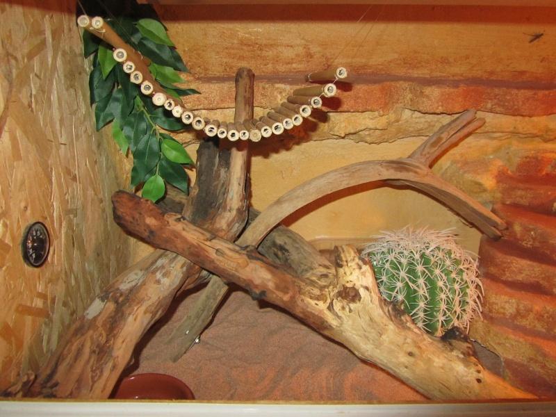 Decoration et fond du terra  Img_3012