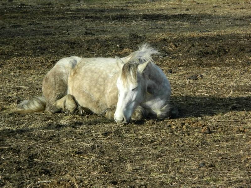 CONCOURS PHOTO : Les chevaux paresseux... Winter10