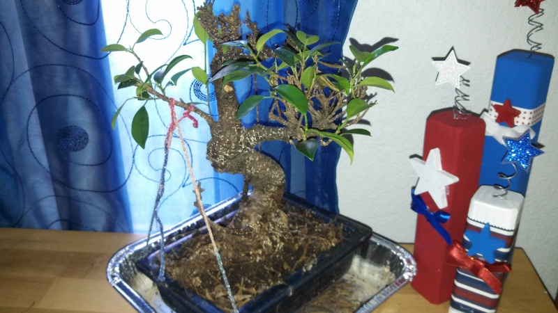 Bonsai from seed and a few questions Img_2011