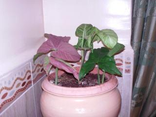 mes plantes d'intérieurs - Page 3 File0010