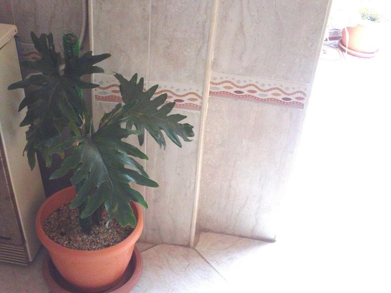 plantes d'intérieur  File0913