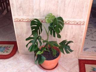 mes plantes d'intérieurs - Page 3 File0917