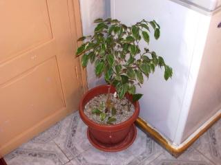 mes plantes d'intérieurs - Page 3 File0918