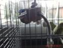 jeux pour perruches Gedv0012