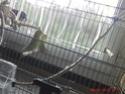 jeux pour perruches Gedv0013