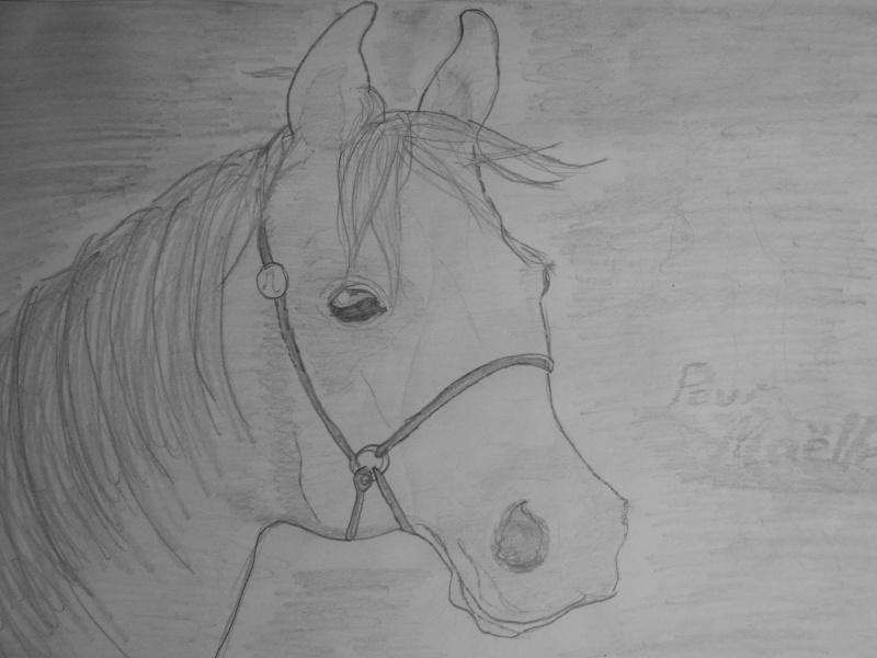 J'ai réussi voilà mes dessins et 2 photos Dscn2312