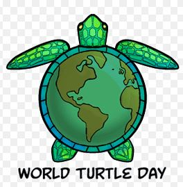 MAY 23rd is WORLD TURTLE DAY Turtle11