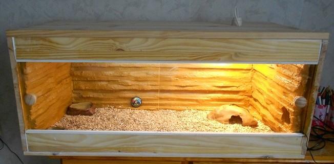 Mon premier terrarium fait main Dscn2430