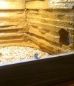Mon premier terrarium fait main Dsc_0010