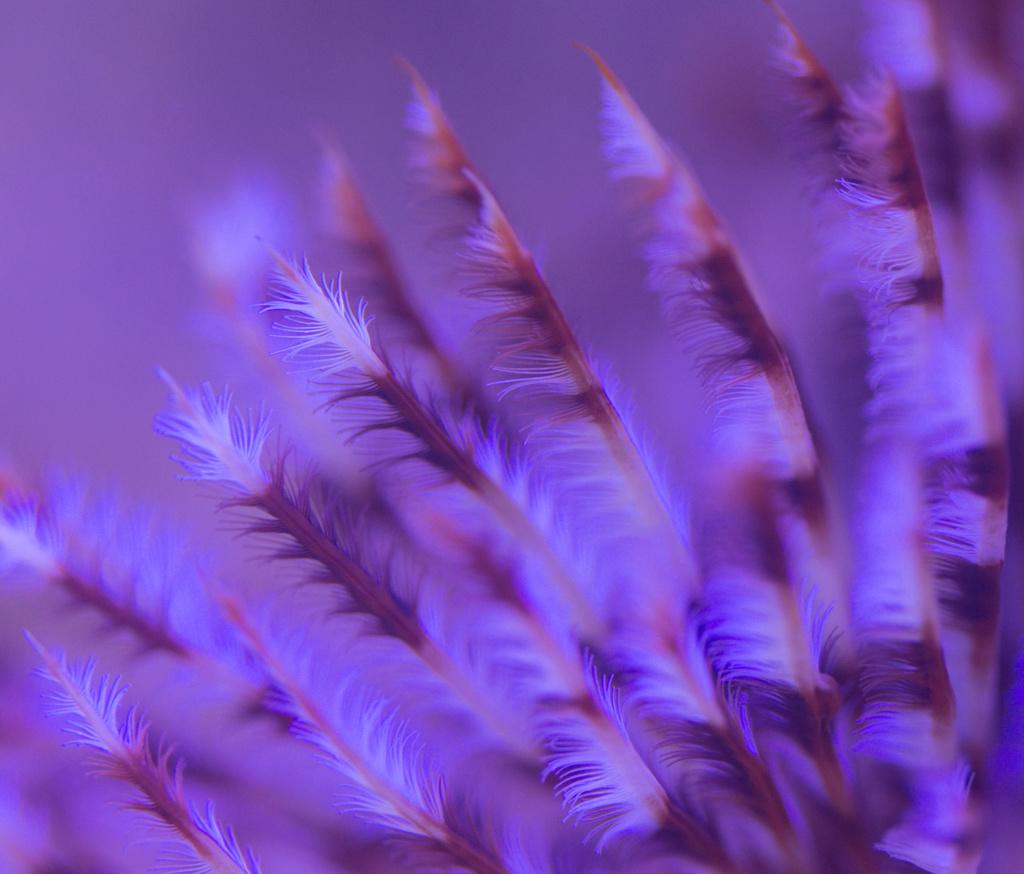 Red sea nano Dsc_4710