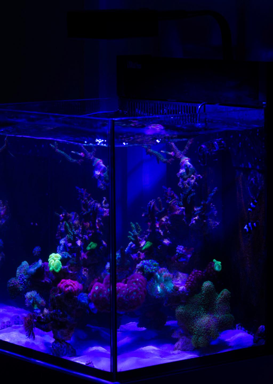 Red sea nano Dsc_4810