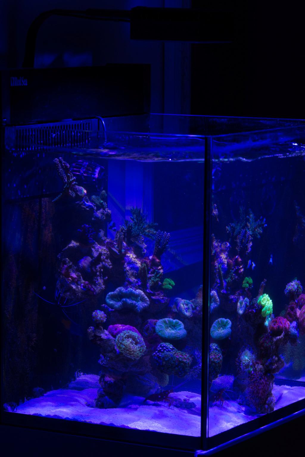 Red sea nano Dsc_4811