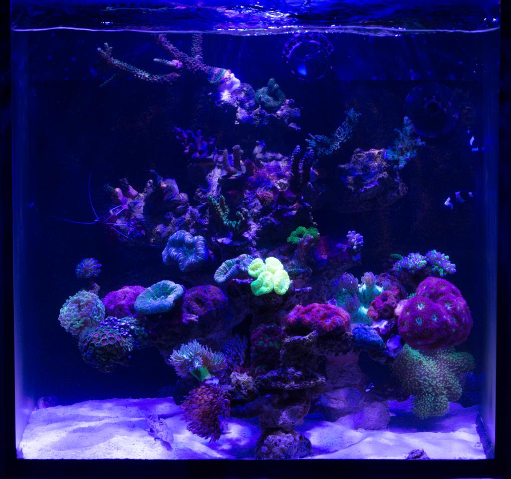 Red sea nano Dsc_4812