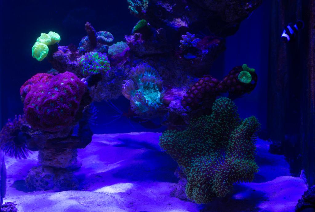 Red sea nano Dsc_4814