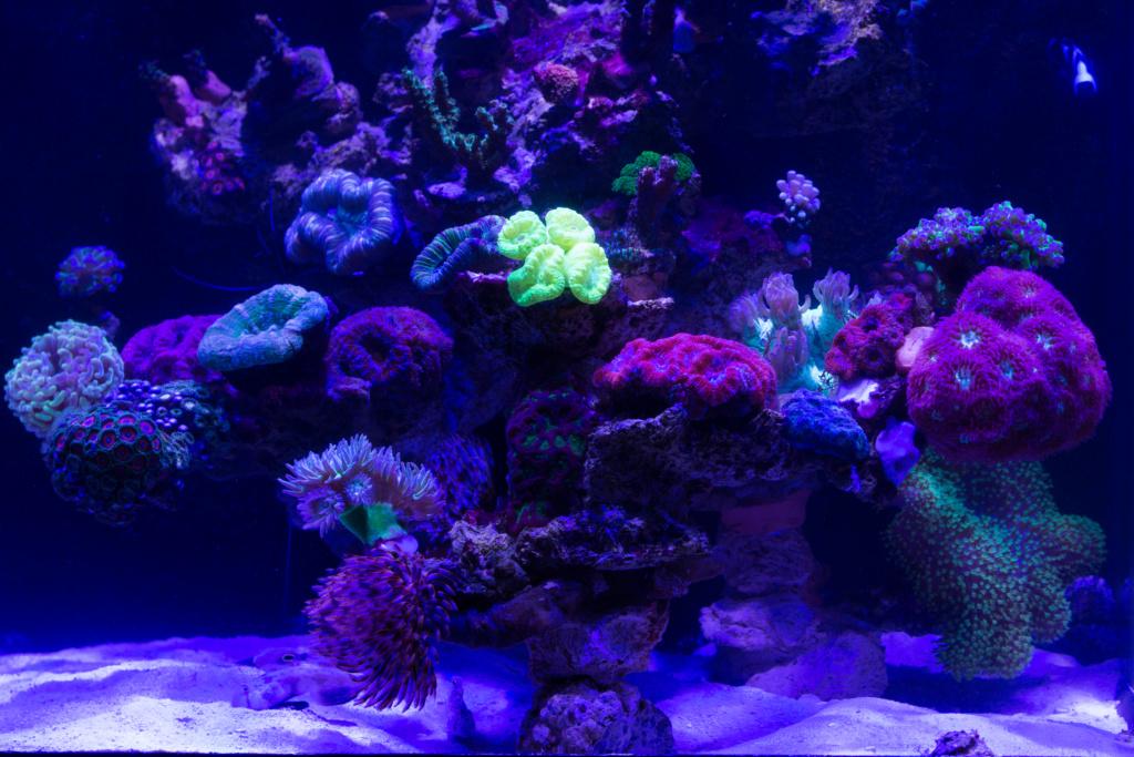 Red sea nano Dsc_4815