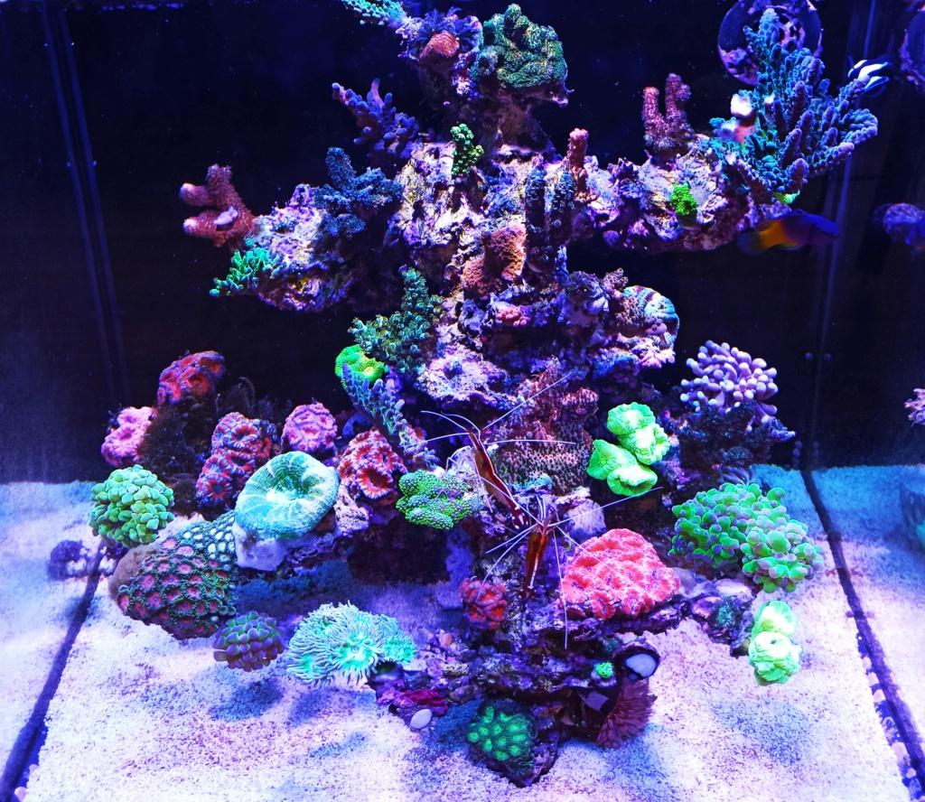 Red sea nano - Page 2 Img_2030