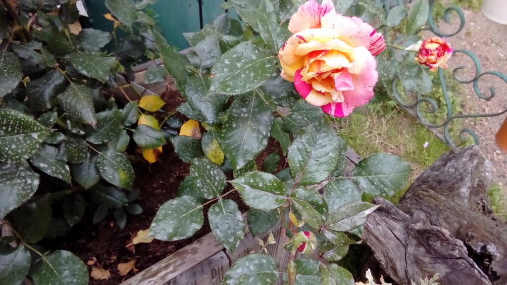 Le potager  et les fleurs  aujourd'hui P_201932