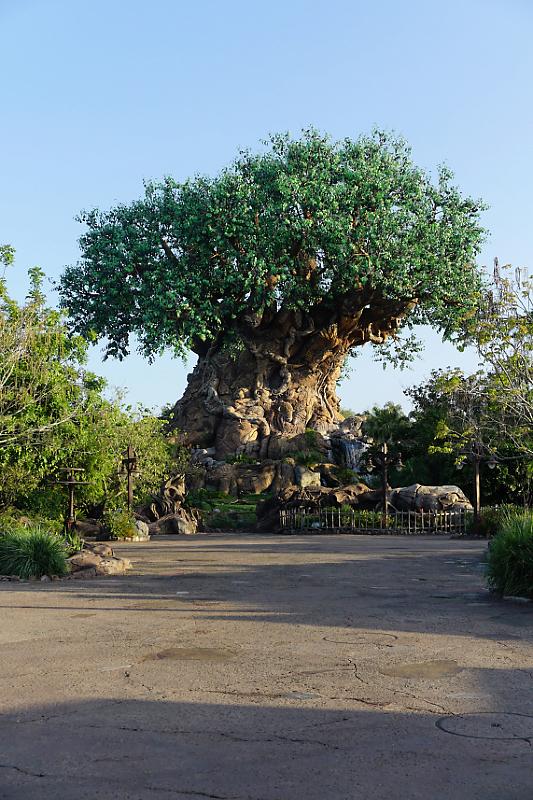 """The happiest place on Earth""  Walt Disney Wolrd Port Orléans Riverside du 11 au 20 Avril 2018 - Page 6 Dsc01853"
